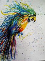 Parrot by AnoushayKhan