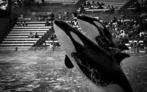 Sea World by ProtectorOfLove