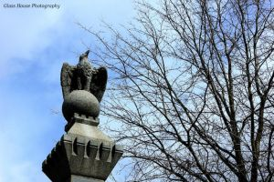 Eagle by GlassHouse-1