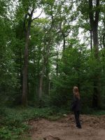 French Forest 03 by H9Stock