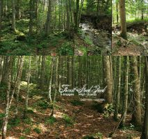 Forest Stock Pack _New Images_ by neverFading-stock