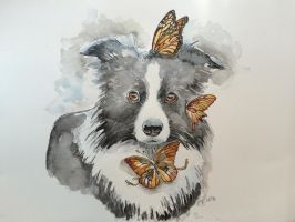 monarchy of a border collie by AnjaBas