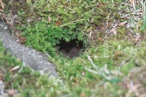 a hole in the ground by kytti-stock