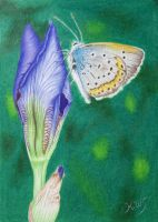 Buds and Butterfly by KW-Scott