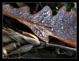 A sign of the autumn II by Liquid82