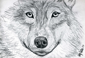 Wolf Sketch by oofer
