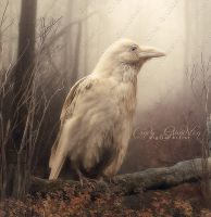 White Whild Raven by CindysArt