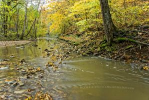 Yellow Fever Forest by Jacob-Routzahn