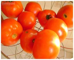 Tomatoes by OohmyGod