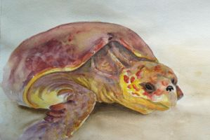 seaturtle on sand 2 by dovespirit
