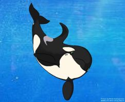 Little orca named ZuO by Tokitae
