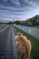 Kitty at Ocracoke Lighthouse 2 by pewter2k
