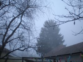 Fog and Pine Tree by llallogan