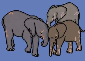 African Elephant Adopts by NSRescueCenter