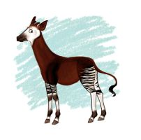 Okapi by candidae
