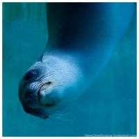 Sea Lion - Pup 010 by ShineOverShadow