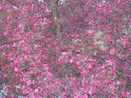 Pink tree 2 by Icecat13