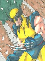 Wolverine Sketch Card by ibroussardart