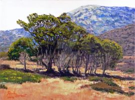 Eucalyptus Grove 2 Harbors Catalina Island by RandySprout
