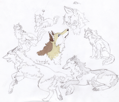 templates read the rules by insanity wolf on deviantart