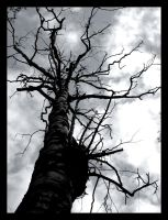 branches by razorblade-666