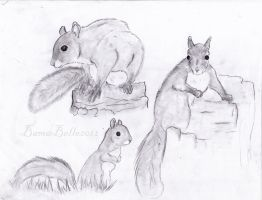 Squirrels by BamaBelle2012