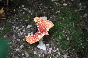 DSC 0019 Fly Agaric by wintersmagicstock