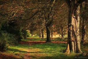 Elvin path . by 999999999a