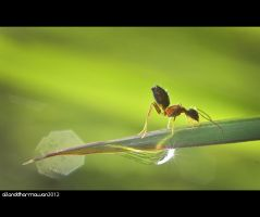 Good Morning, Ant... by allanddharmawan