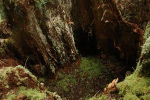 Inside the hollow stump by Miffliness-Stock