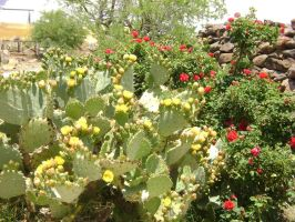A Cluster of Cactus by RedStarMorning