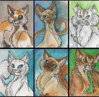 ACEO Cat Series Sheet 1 by Eviecats