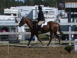 Dressage Ride by ponies4life-2013