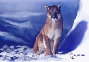 Lioness by hguerfi