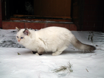 Snowy Pounce by Valvador
