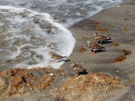 Shore Birds at the Beach by Dream-finder