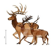 Early Pleistocene deer comparison chart by HaughtyFlaki
