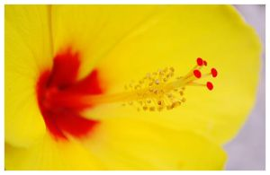 yellow and red by SiMpLePlAnLaLLu