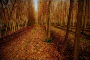 Red autumn by Mr-Vicent