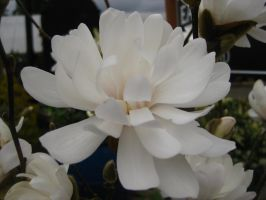 White flower by Danika-Stock