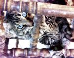 i can see you.. by evana