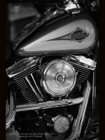Harley in BnW by GMCPhotographics