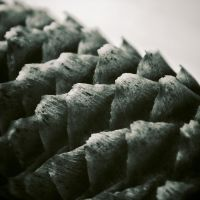 Scales by OliverBPhotography