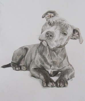 Dog drawing by Rthyin
