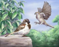 Sparrows by pixelstration