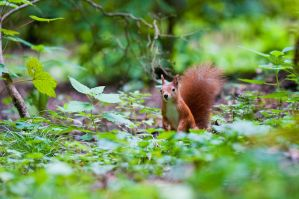 prying squirrel by Blubdi-Photography