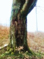 body of the tree by czmartin