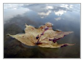 Traces of Autumn by underdogg101