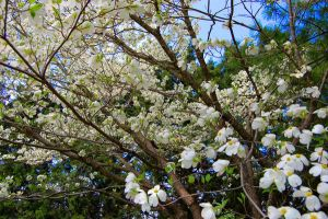 Springtime Blossoms by saraaamarie