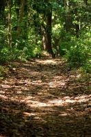 Path in the Woods by andrewsgirl123